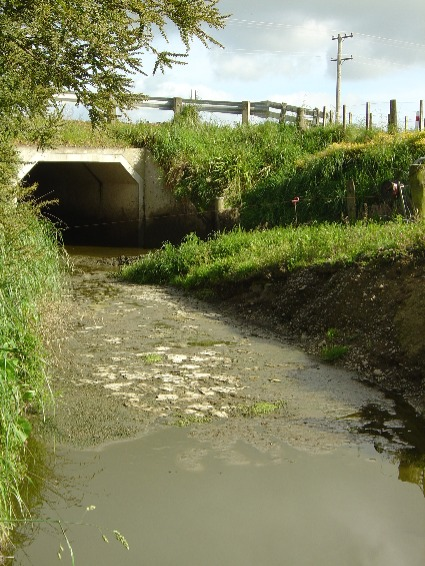 Vegetative Treatment System failure - Water pollution from dairy operation.