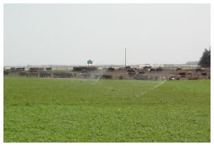 An example of a Vegetative Treatment System Area.